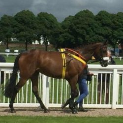 Brown Paddy in paddock at Worcester