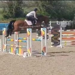 626798_scopey-5-year-old-16-1hh-ish-mare_photo_11_1626349627_img